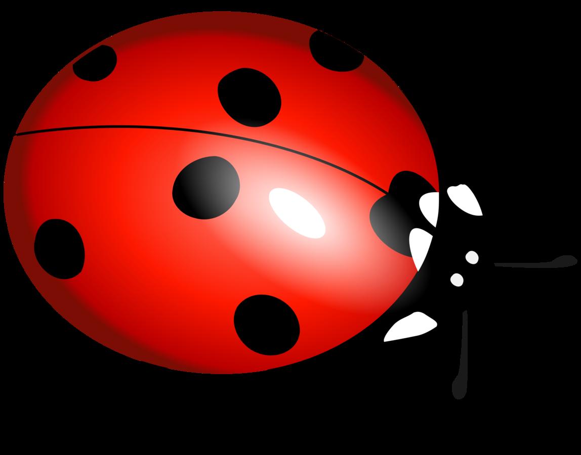 A z of qa. Ladybug clipart lifecycle