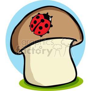 Ladybugs clipart mushroom. Ladybug on a royalty