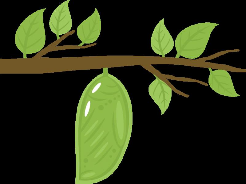 Chrysalis panda free images. Pear clipart hungry caterpillar