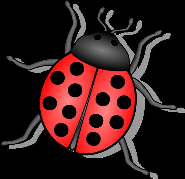 Ladybug clipart red animal. Lady bug animals bugs