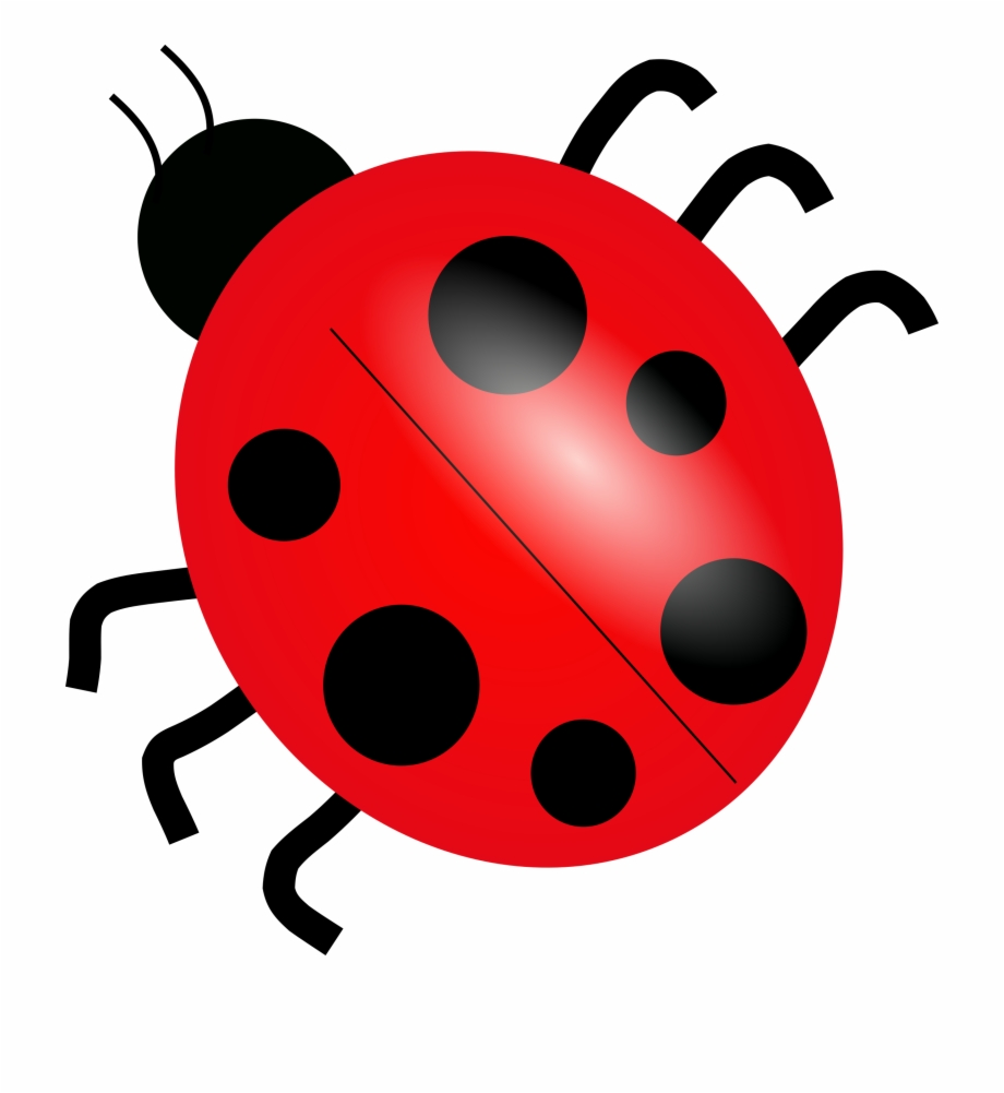Ladybug clipart small. Download png picture clip