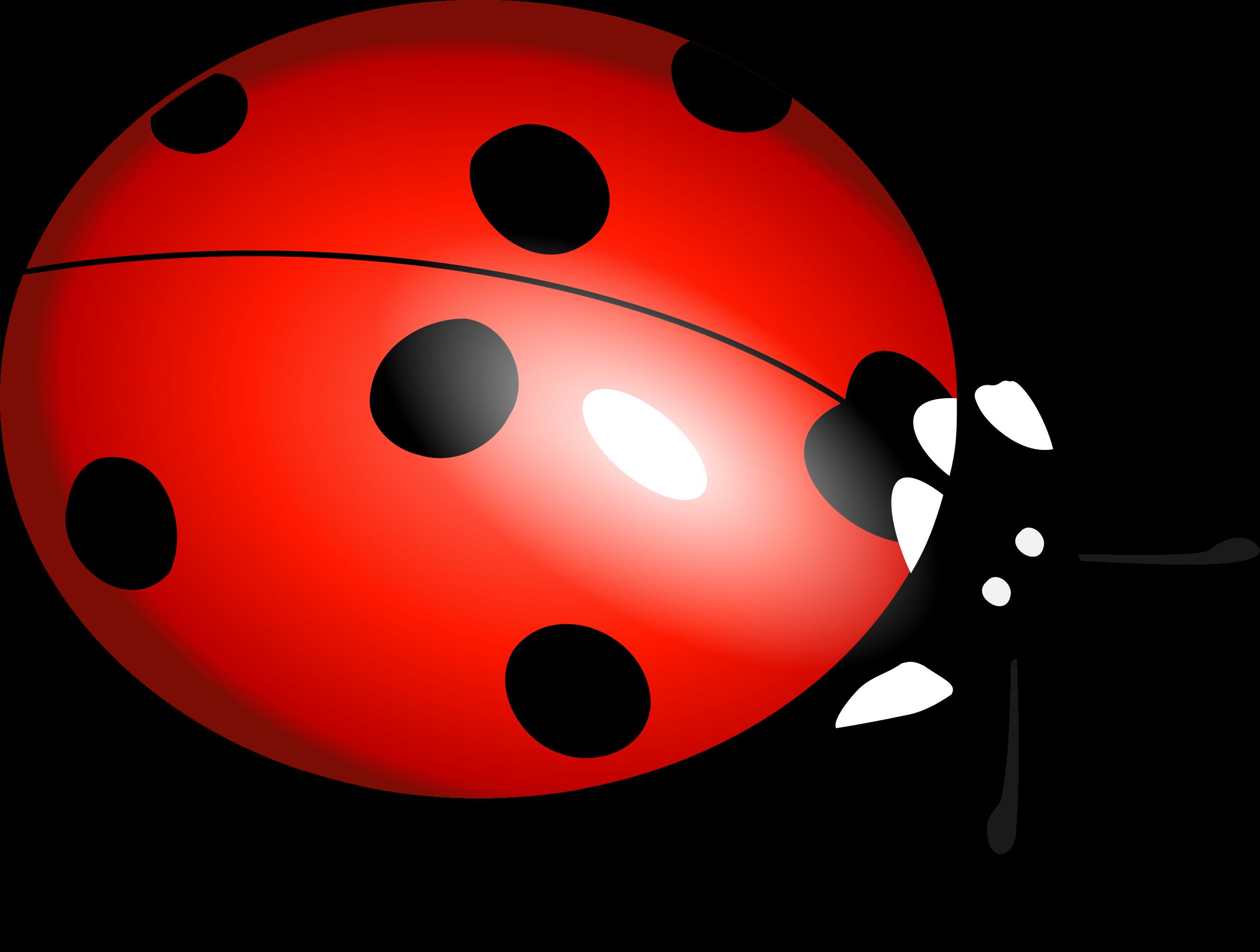 Ladybirds boru big image. Ladybug clipart small