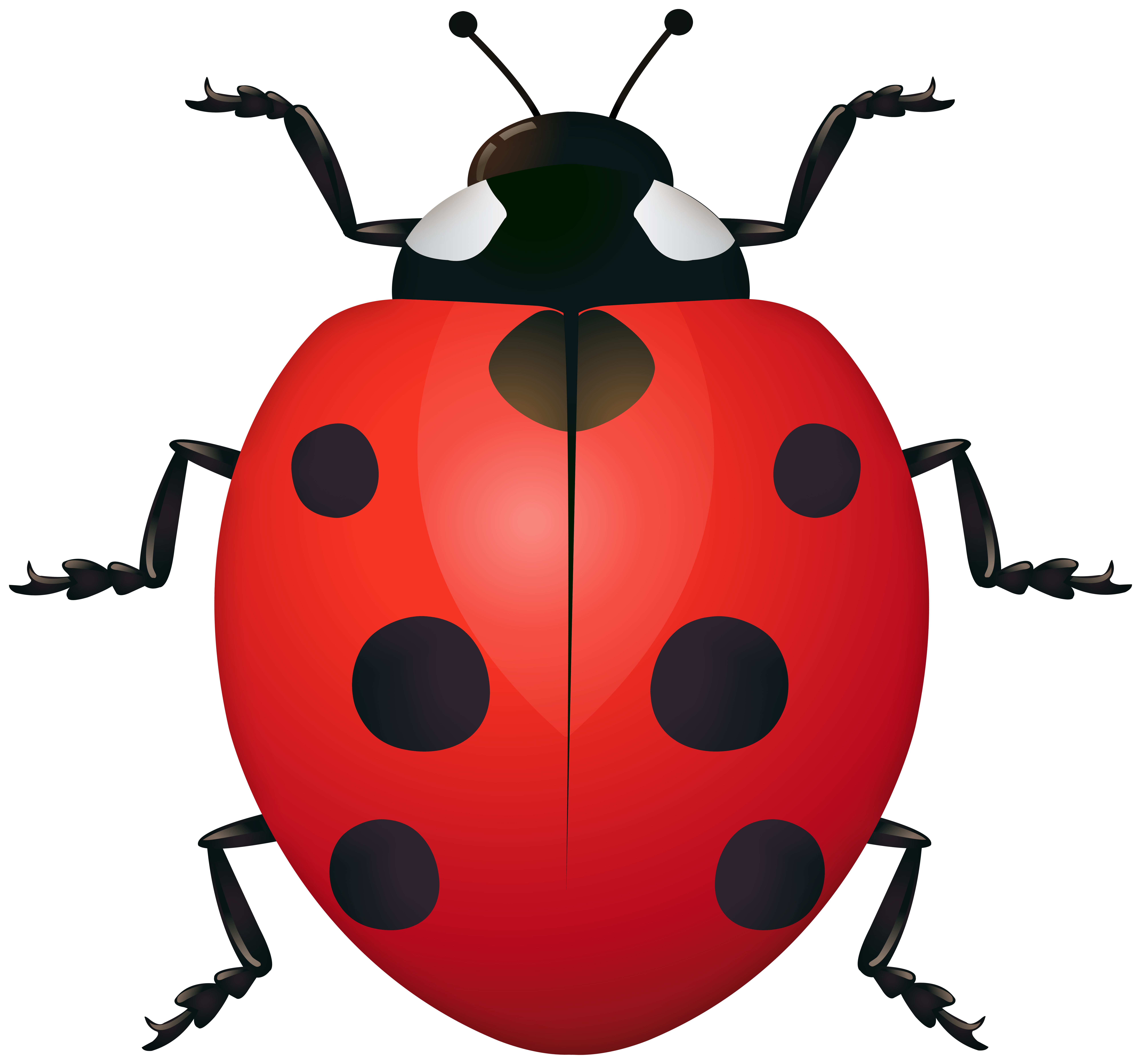 Image gallery yopriceville high. Ladybug clipart spring