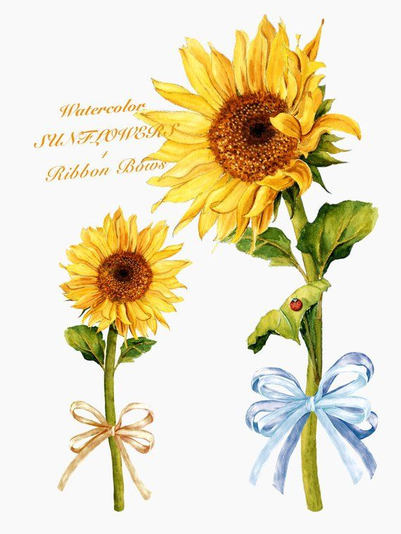 Ladybug clipart sunflower. Watercolor rustic fall flower