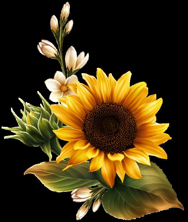Ladybug clipart sunflower. Fleurs flores flowers bloemen
