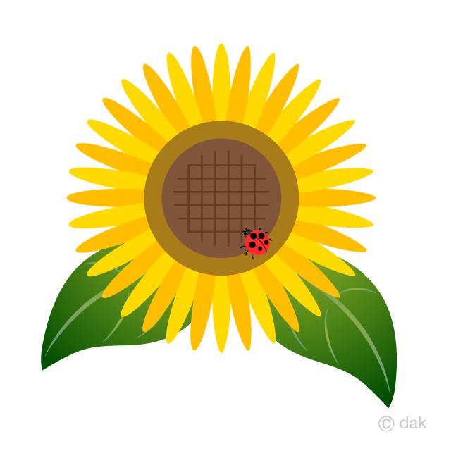 And free picture illustoon. Ladybug clipart sunflower