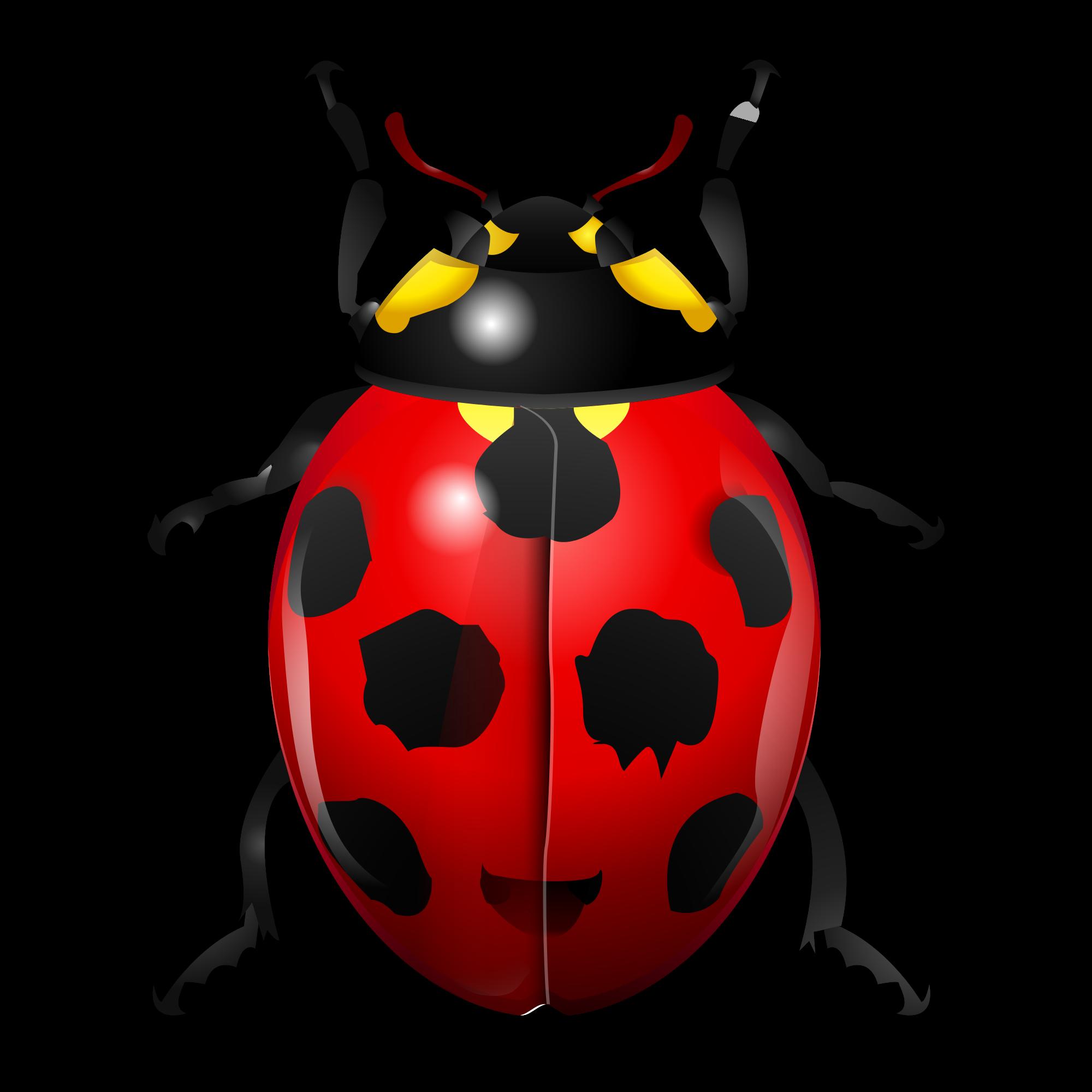 File oxygen kbugbuster svg. Ladybug clipart symmetrical