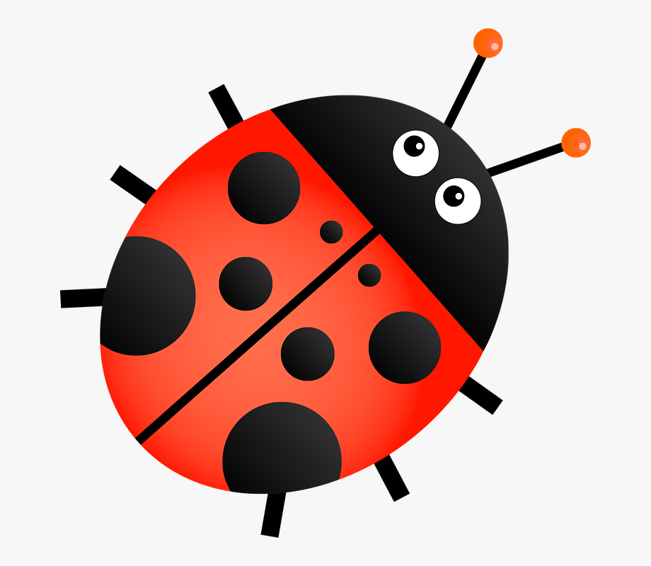 Ladybug clipart transparent background. Orange