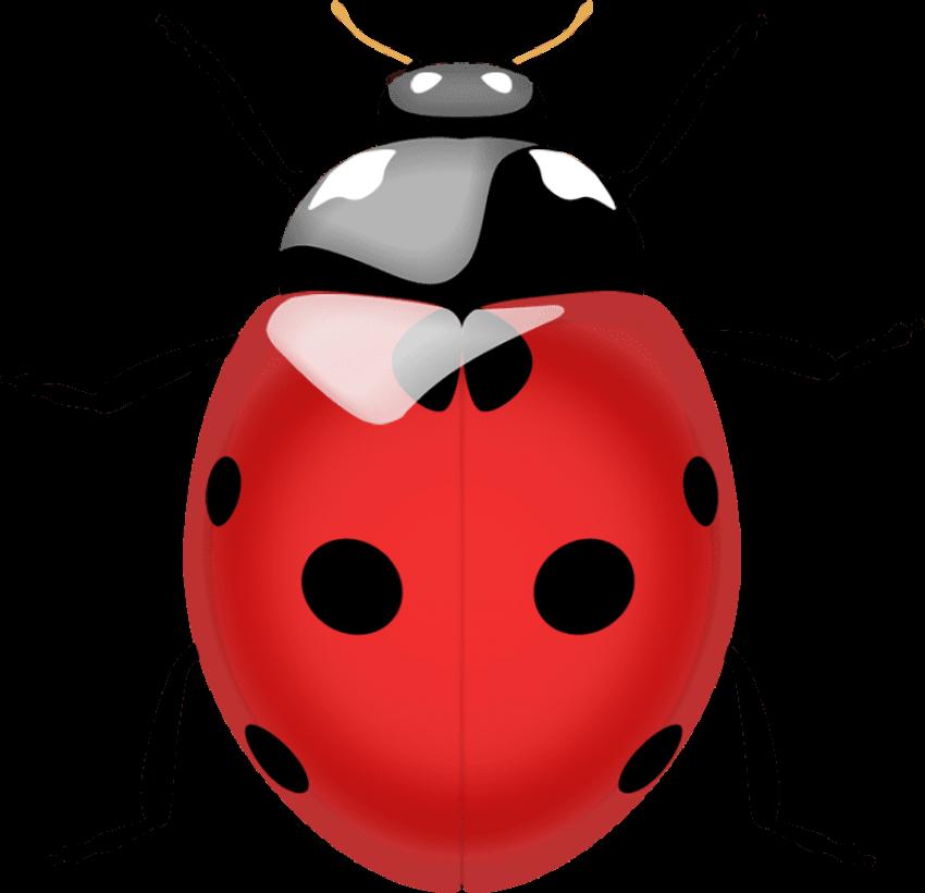 Ladybugs clipart transparent background. Ladybug png free images
