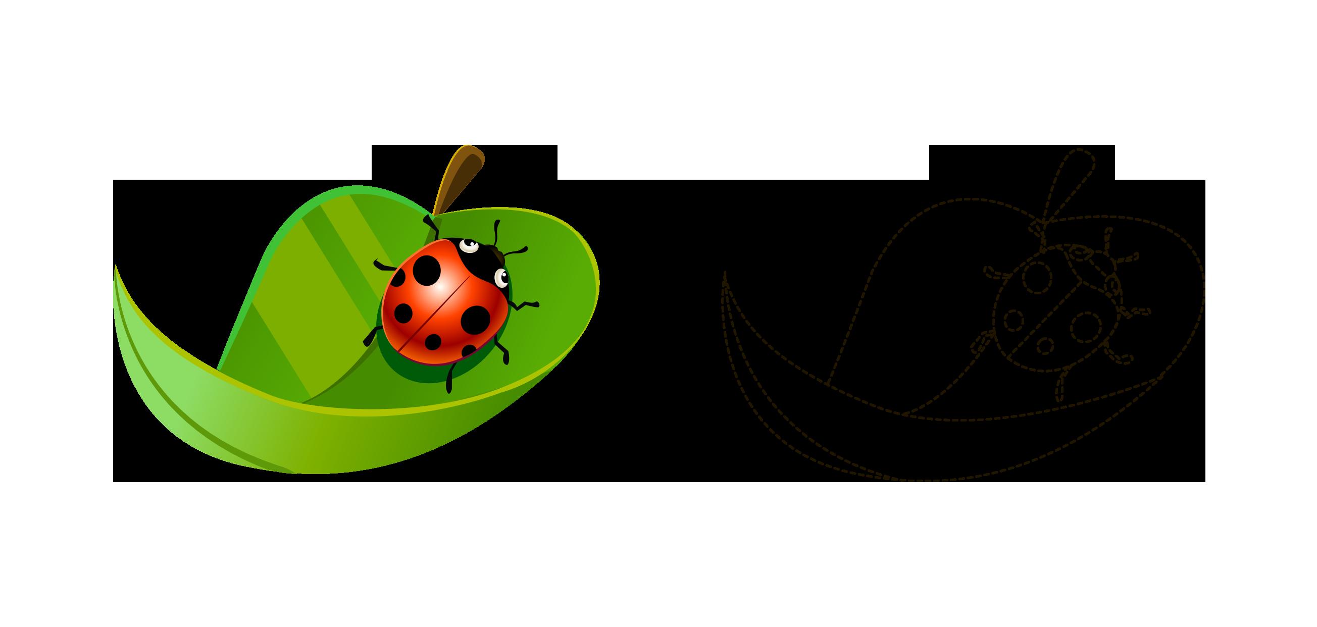 Ladybug clipart watercolor. Coccinella septempunctata cartoon painted