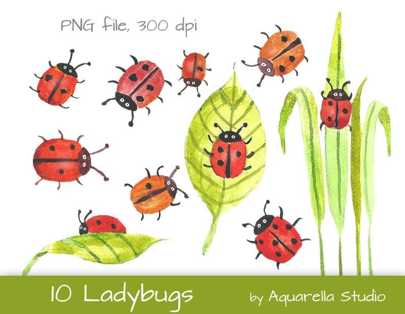 Ladybug clipart watercolor. Ladybugs ladybird scrapbook instant
