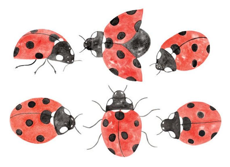 set instant download. Ladybug clipart watercolor