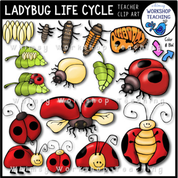 Life cycle clip art. Ladybug clipart whimsical