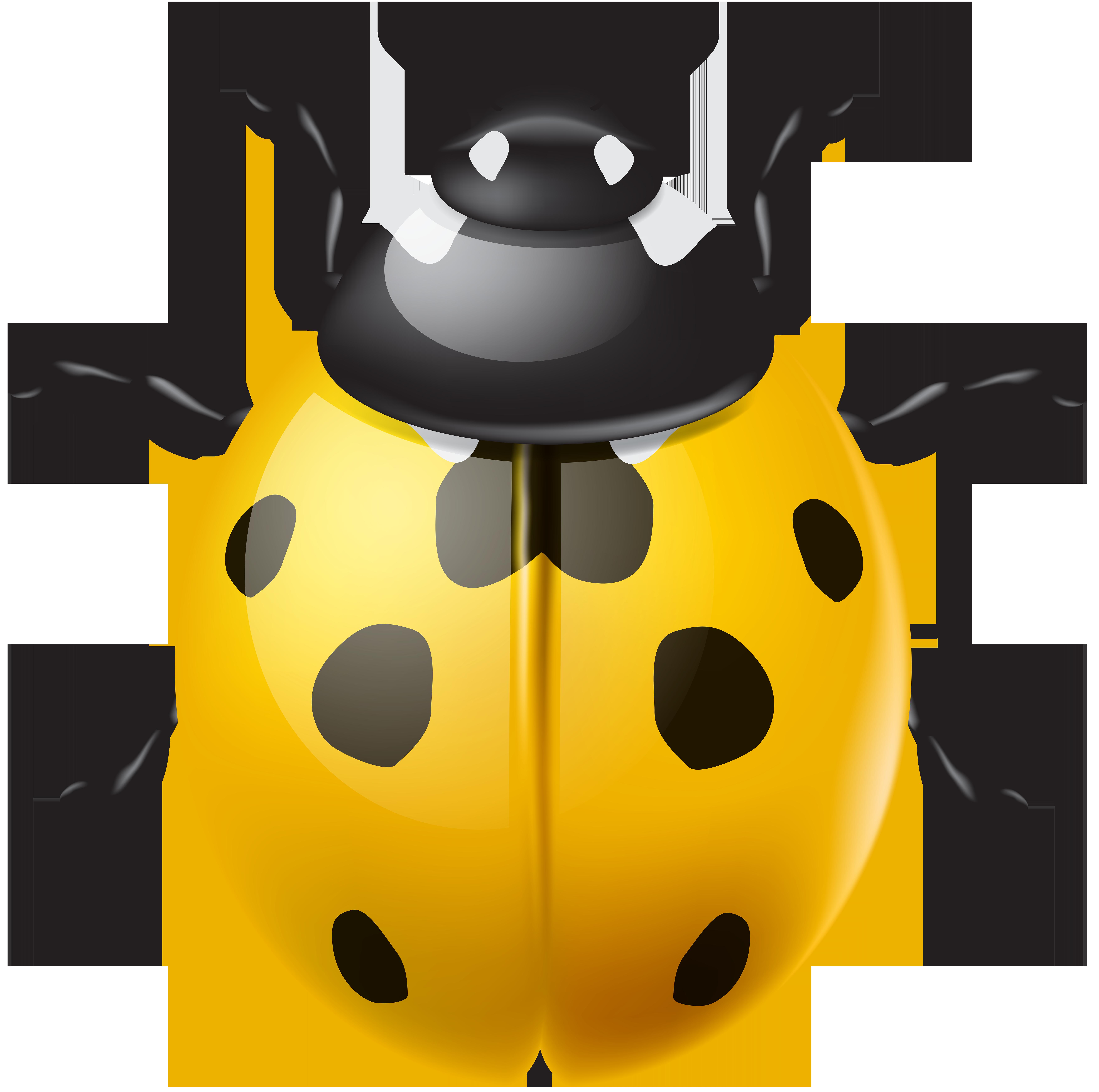 Ladybug clipart yellow ladybug. Ladybird png clip art