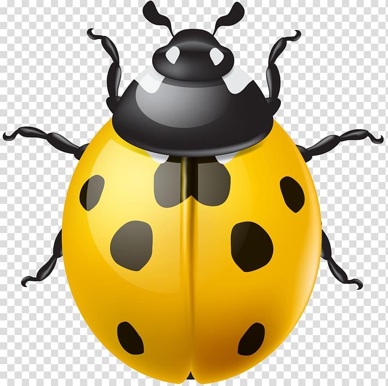 Ladybugs clipart yellow ladybug. Ladybird beetle transparent background