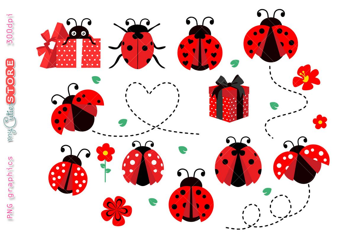 Ladybug clipart real. Collection ladybugs set with