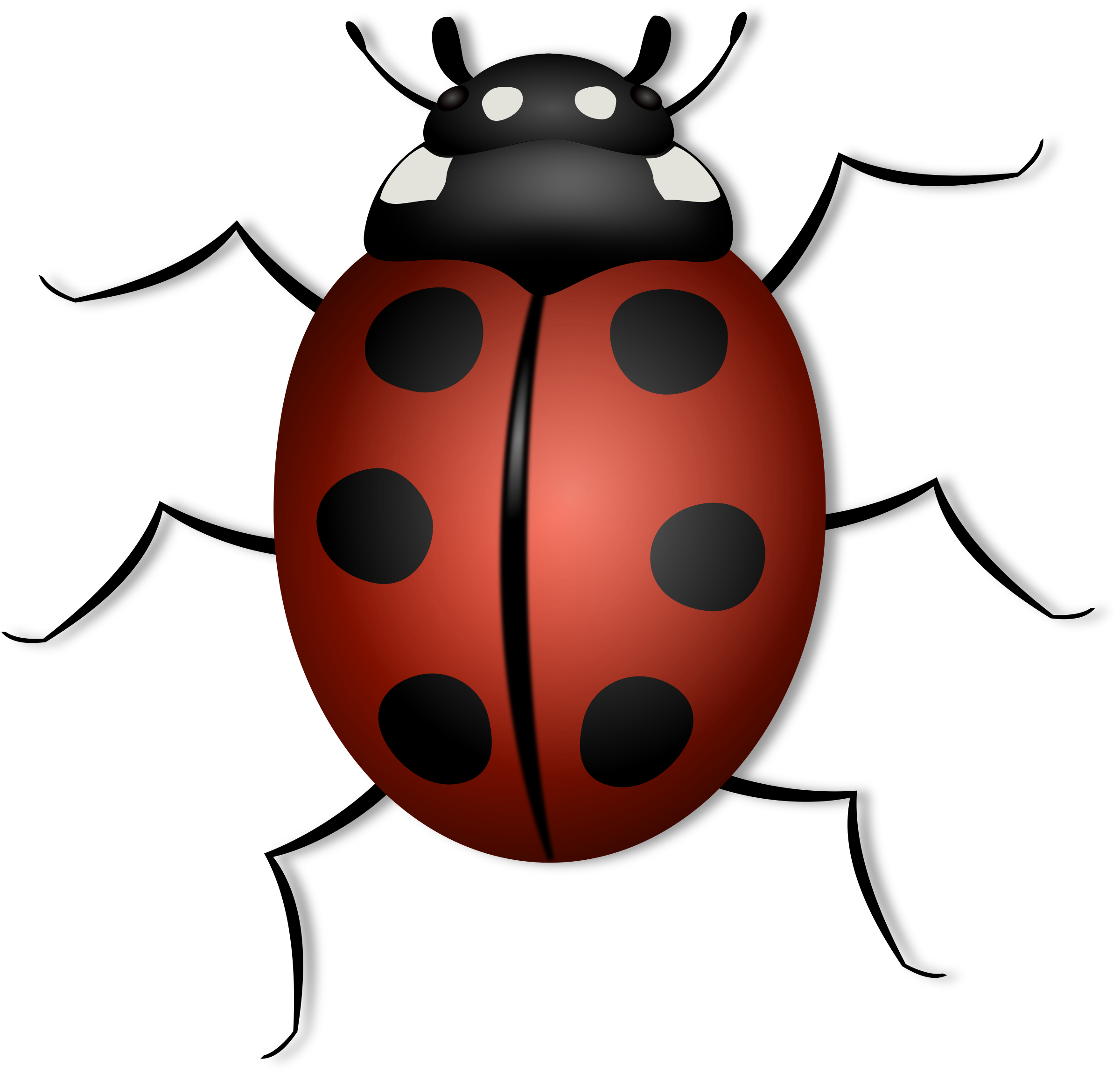 Ladybugs clipart file. Ladybug big image png