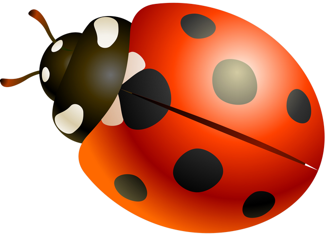 Ladybug clipart garden creature.  png papercraft and