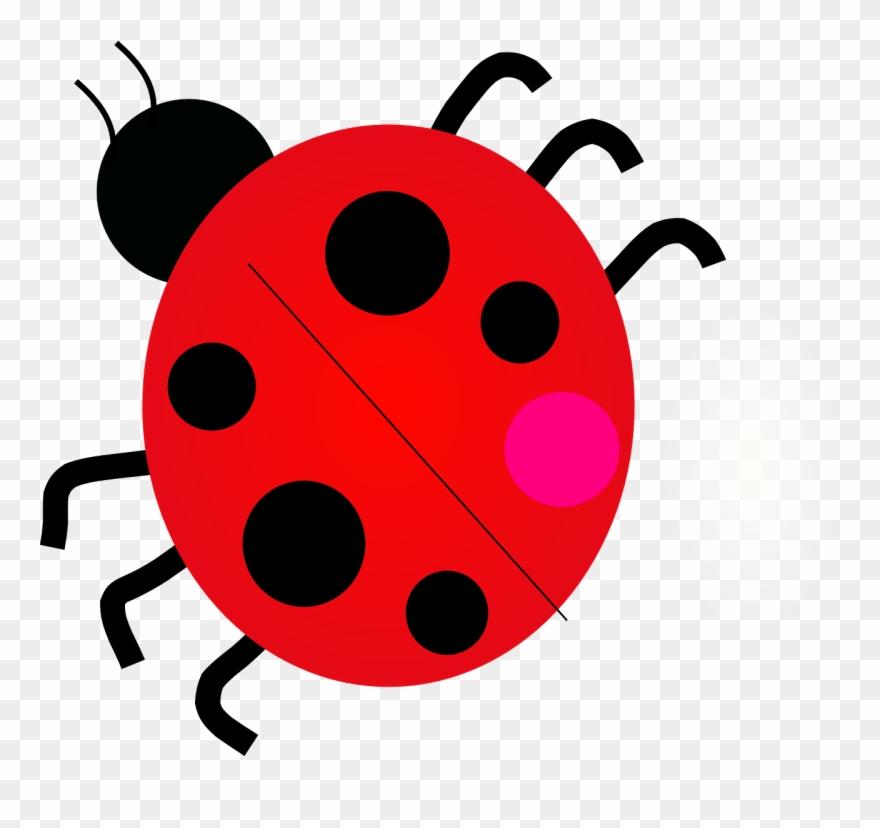 Ladybug ladybird beetle png. Ladybugs clipart junebug