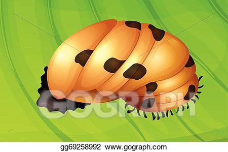 Ladybugs clipart pupa. Vector illustration ladybug life