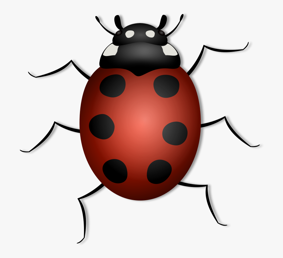 Ladybugs clipart september flower. Lady bug with legs