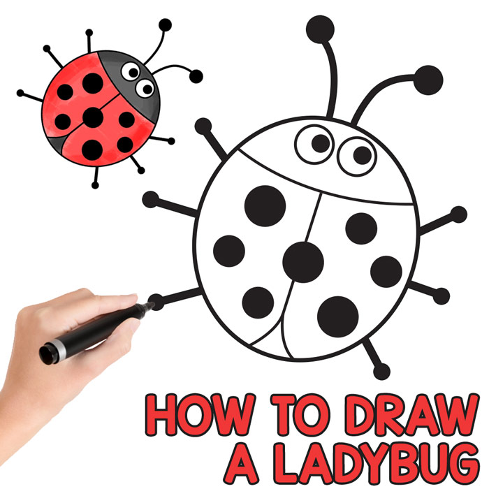 Ladybugs clipart simple shape. How to draw a
