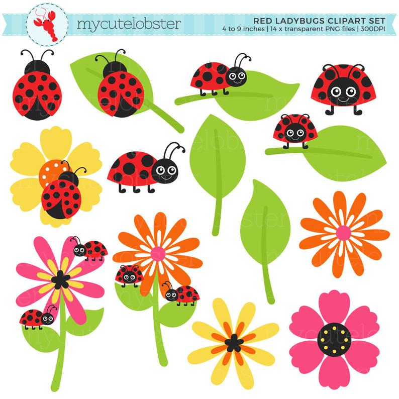 Set clip art of. Ladybugs clipart small