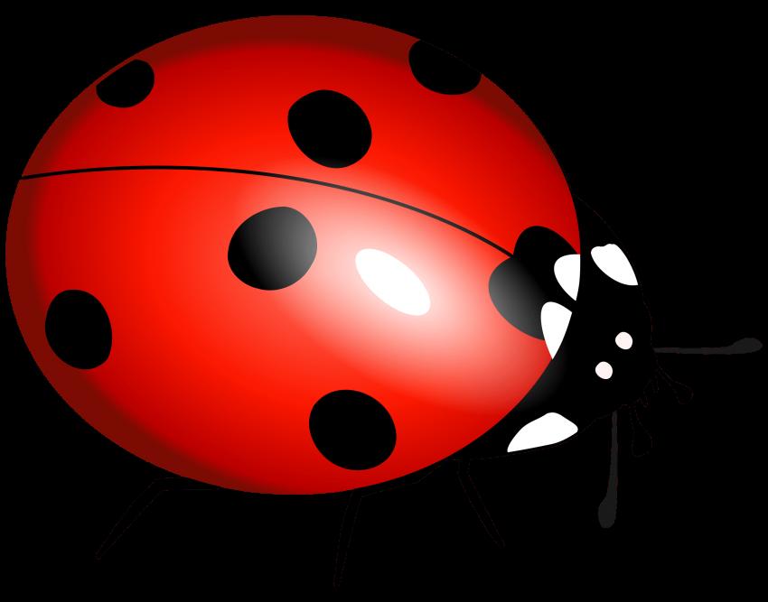 Ladybug png free images. Ladybugs clipart transparent background