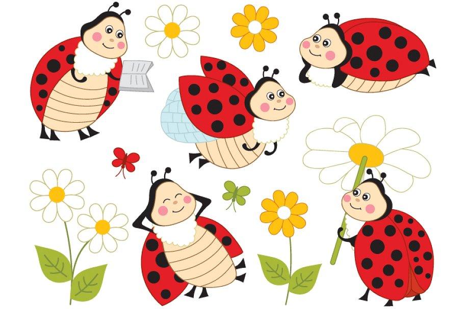 Ladybird set . Ladybugs clipart vector