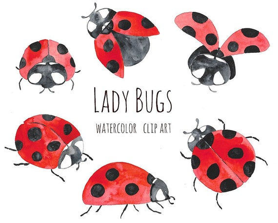 Ladybugs clipart watercolor. Buy for usd lady
