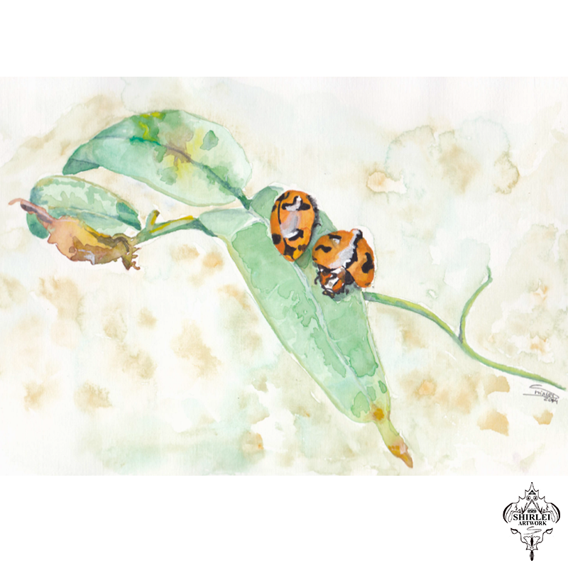 Shirlei barnes page of. Ladybugs clipart watercolor