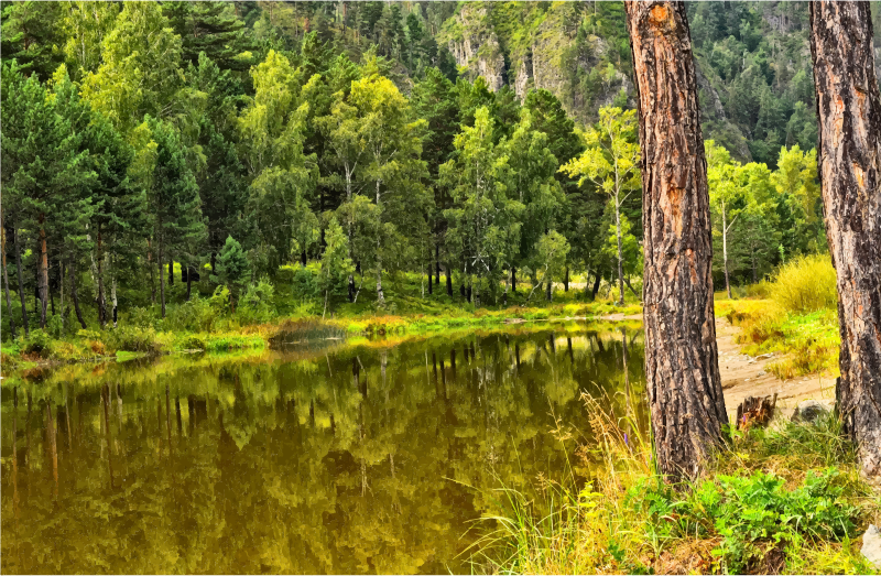Lake clipart forrest. Coniferous tree forest transparent