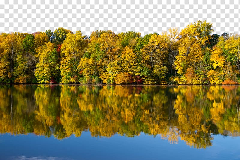 Lake clipart forrest. Forest background transparent png