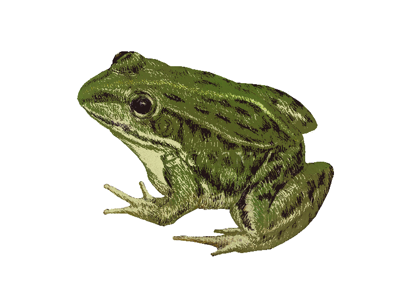 Game survive the notre. Lake clipart frog pond