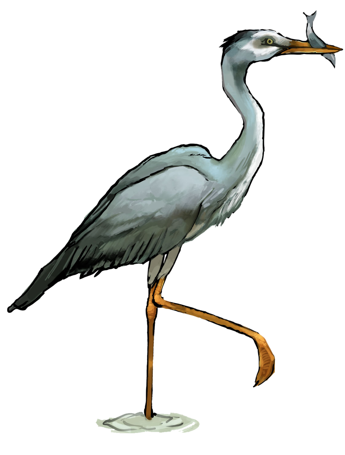 Jackson life update central. Lake clipart heron