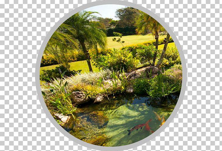 Garden landscape architecture aquatic. Lake clipart spring pond