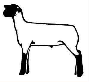 Show lambs res div. Lamb clipart club lamb