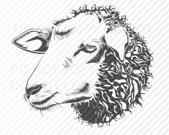 Sheep svg files sheeps. Lamb clipart lamb head