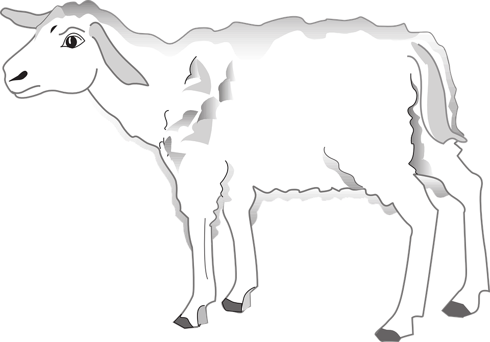 Lamb clipart line art. Girl cliparts shop of