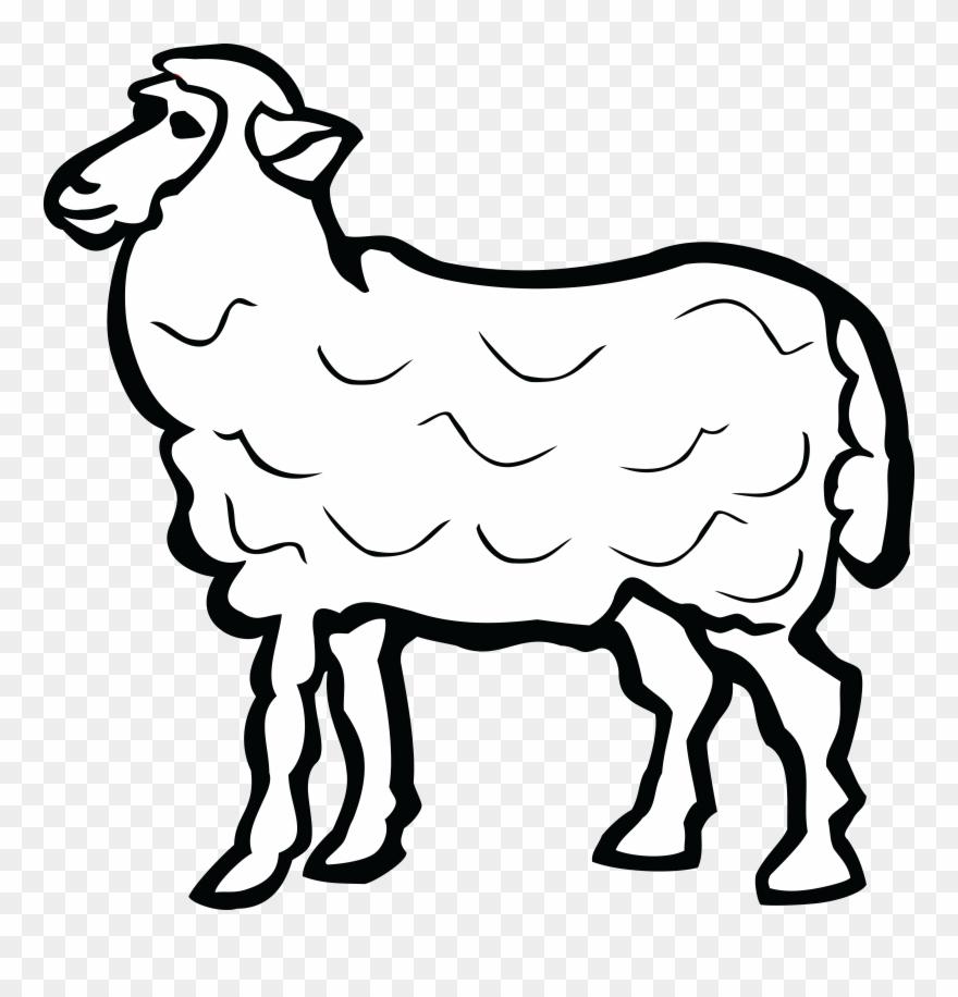 Lamb clipart many sheep. Free of a name