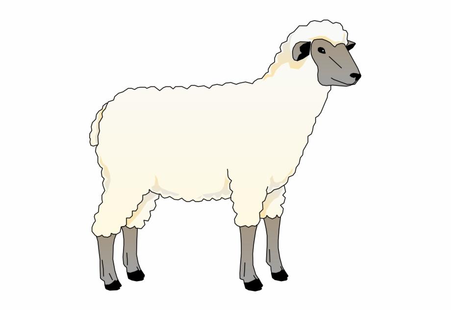 Download and use png. Lamb clipart merino sheep