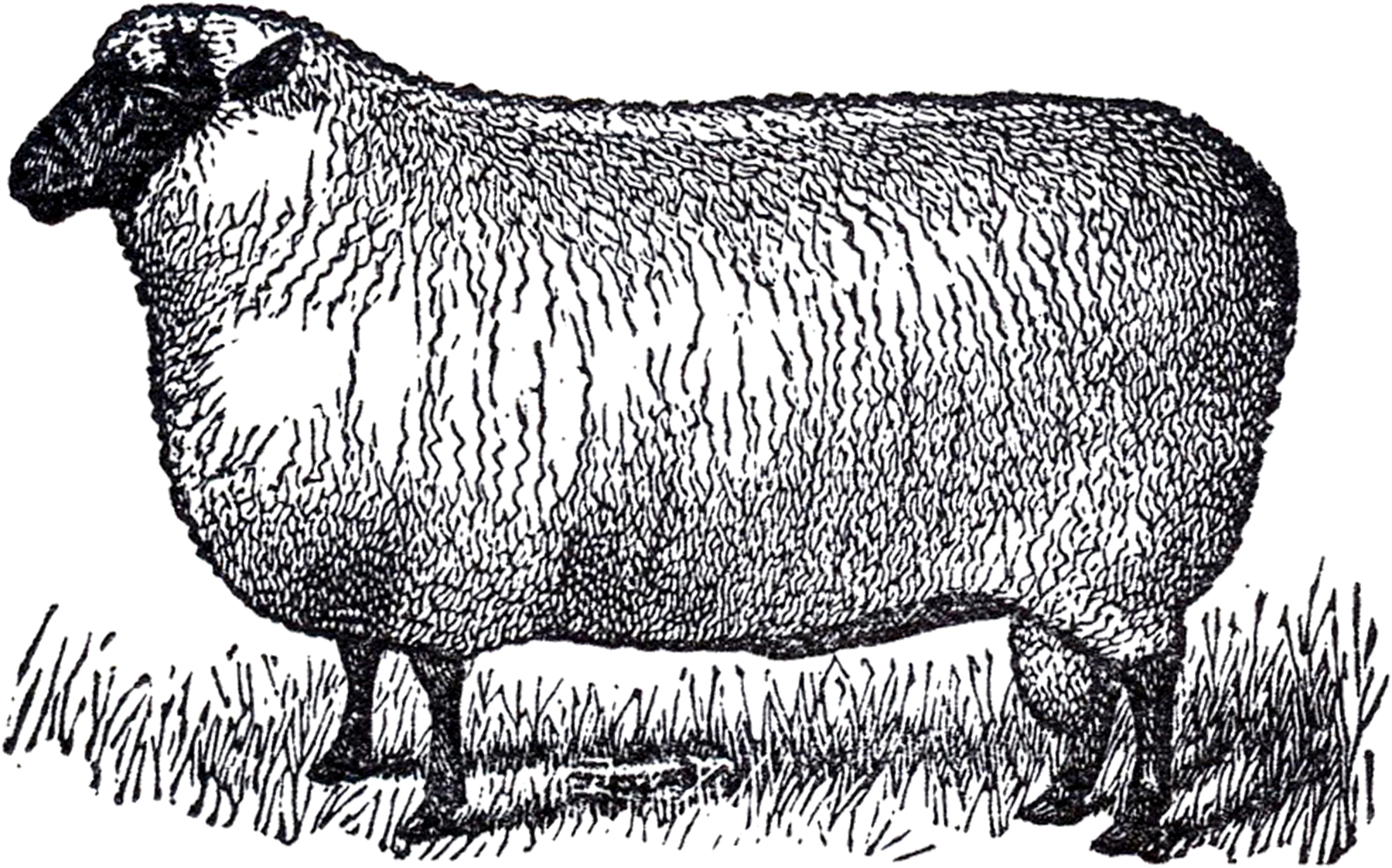 Primitive image the graphics. Sheep clipart vintage