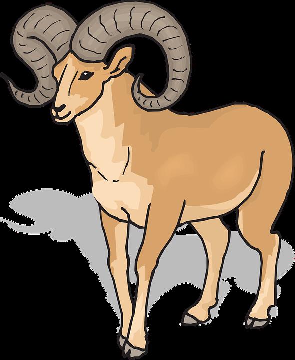 Animal free download best. Lamb clipart ram