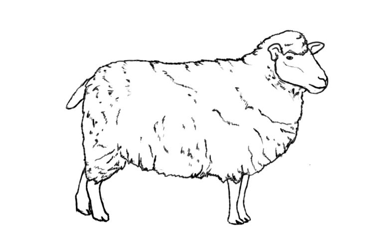 How to draw a. Lamb clipart realistic