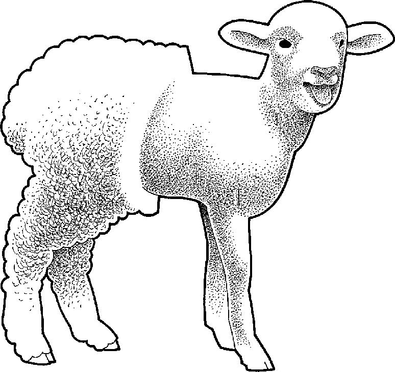 Lamb clipart shearing sheep. Black and white free