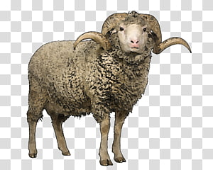 Lamb clipart shearing sheep. Transparent background png cliparts