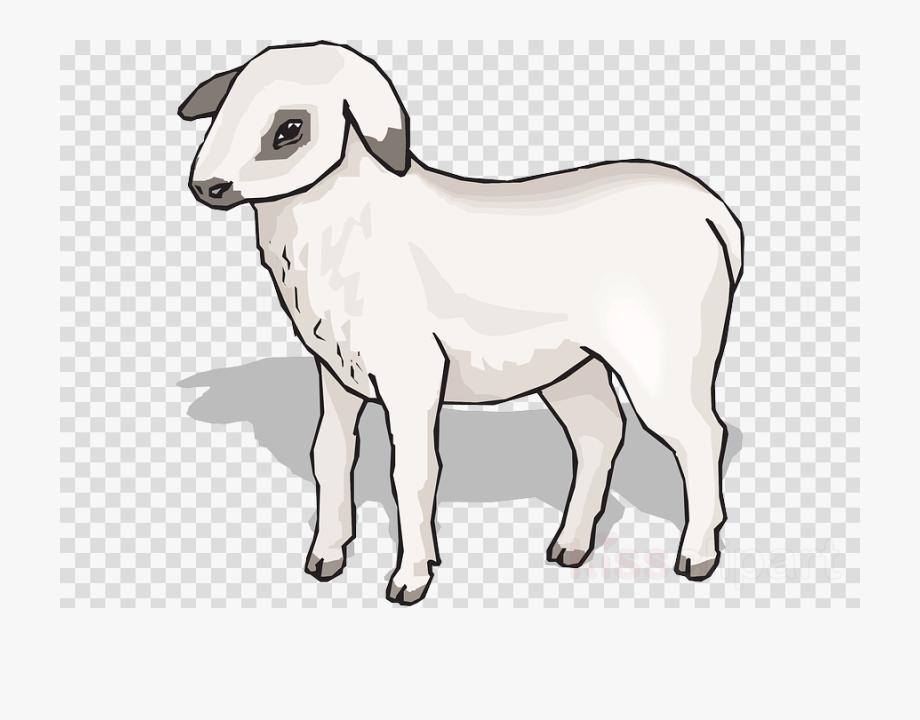 Lamb clipart shee. Sheep pink youtube play