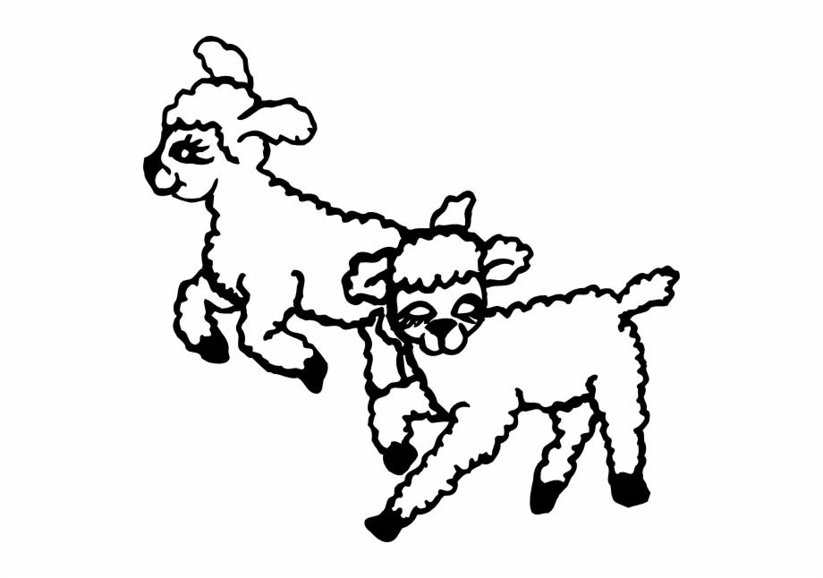 Jumping lambs clip art. Lamb clipart sheep jump