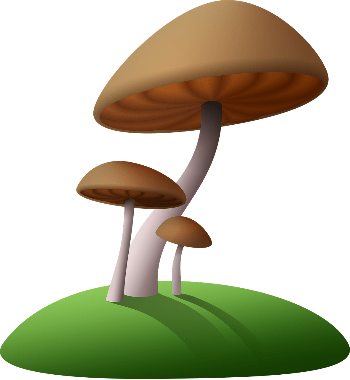 Mushrooms clipart brown mushroom. Transparent png stickpng download