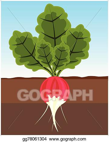 Land clipart. Vector art vegetable radish